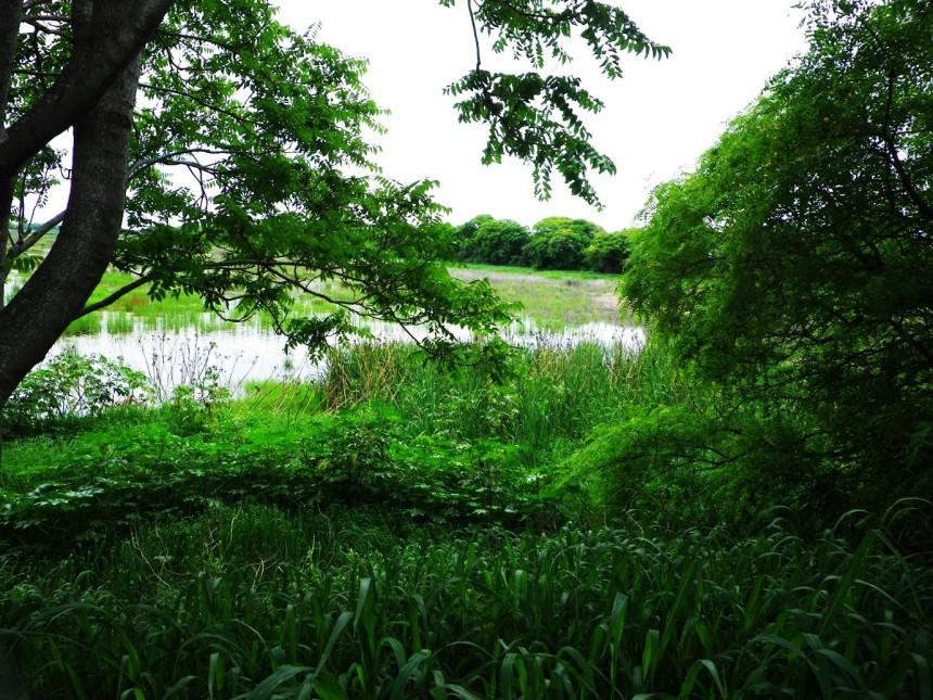 argentina reserva ecologica 4