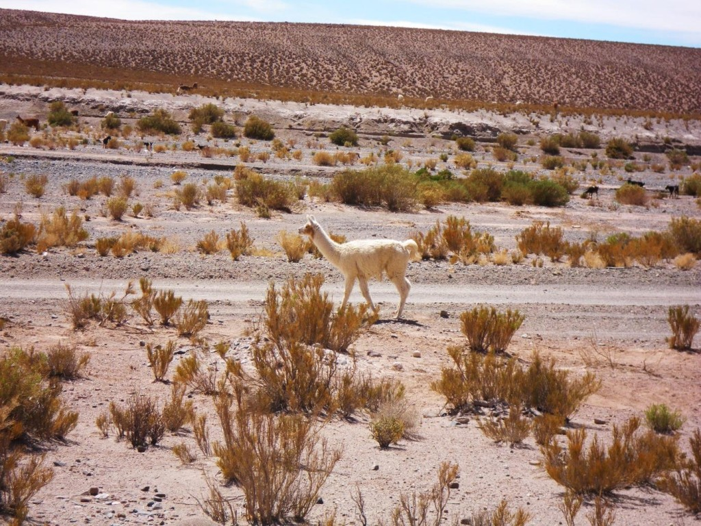 argentina salta jujuy one day from salta 2